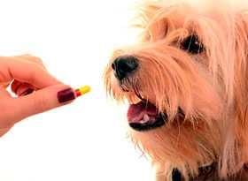 Продажа ветеринарных препаратов