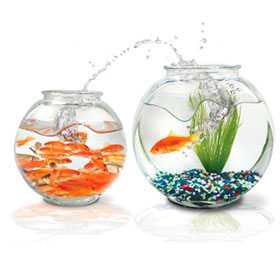 Реализация аквариумов и аксессуаров к ним