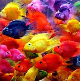 Продажа аквариумных рыб