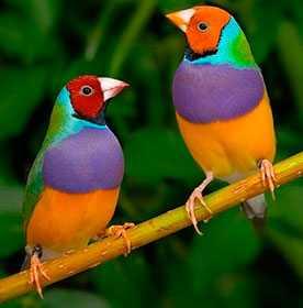 Продажа певчих и декоративных птиц