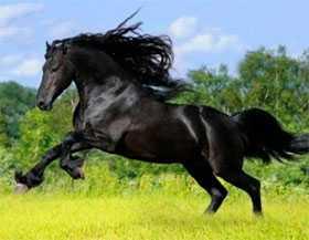 Реализация кремов, гелей и шампуней для лошадей
