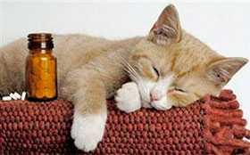 Продажа биопрепаратов от паразитов для кошек и собак