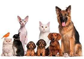 Предоставление профессиональных консультаций по уходу за домашними животными