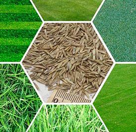 Реализуем семена газонных трав