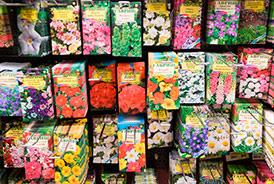 Реализуем семена цветочных культур