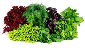 Реализуем семена пряноароматических и зеленых культур